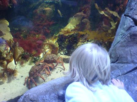 Crabs at the Horniman Museum